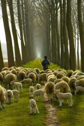 Diferentes tipos de pastores